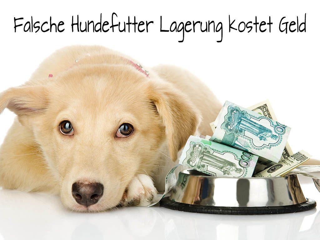 Hund mit Hundnapf und Geld