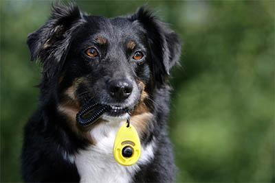 Hund mit Clicker