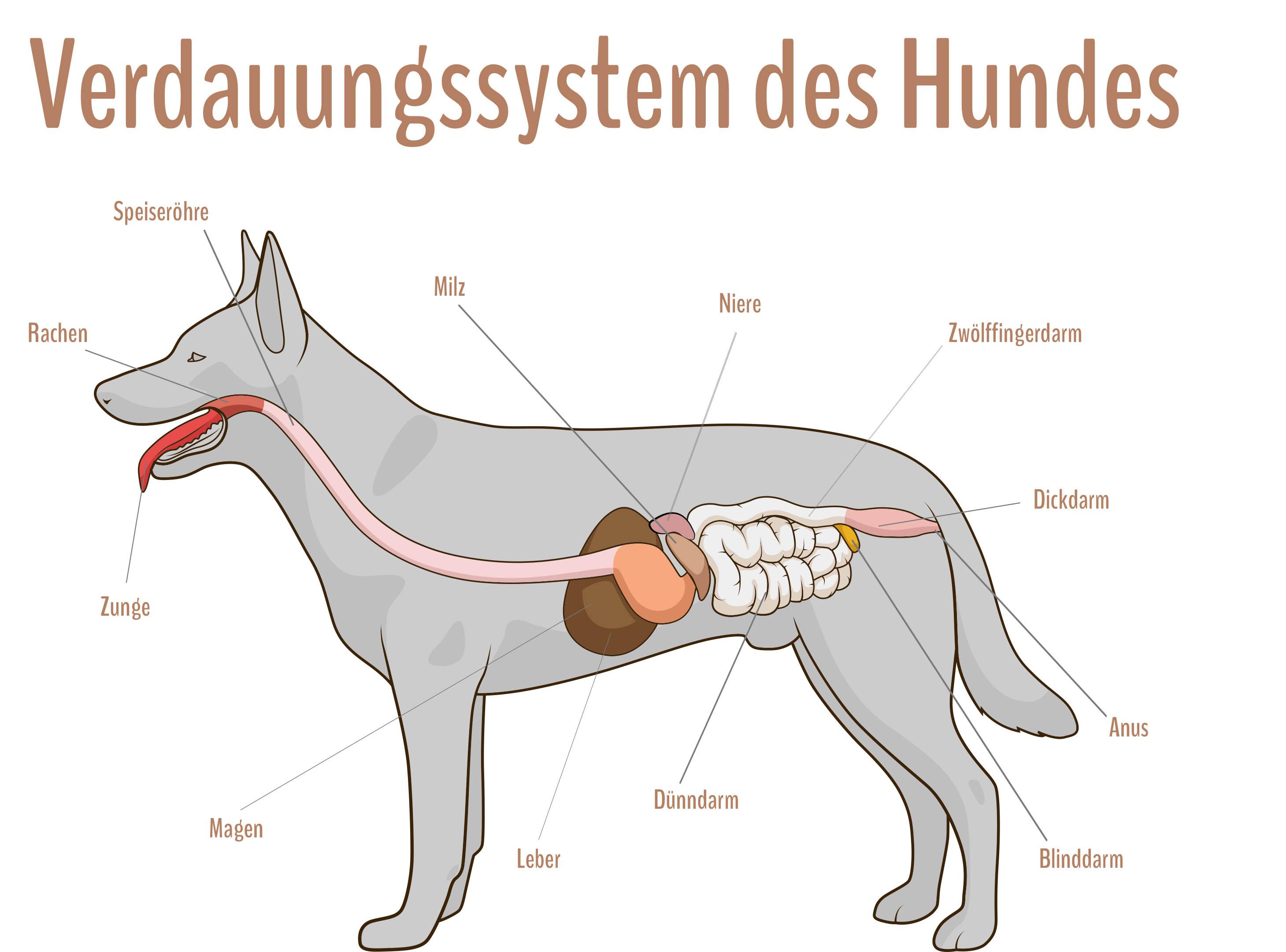 hund magen darm