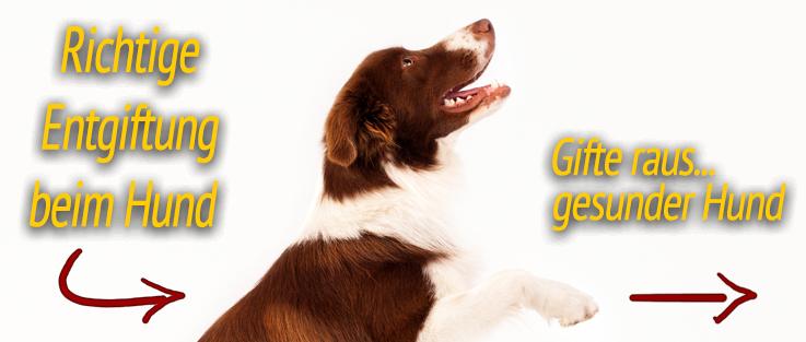 Richtige Entgiftung beim Hund