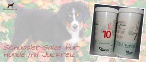 Schüssler Salze für Hunde mit Juckreiz
