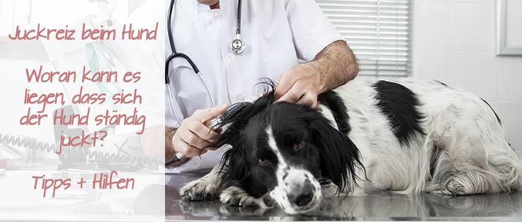 Juckreiz beim Hund - Wieso kratzt mein Hund sich ständig? - Hilfe & Tipps