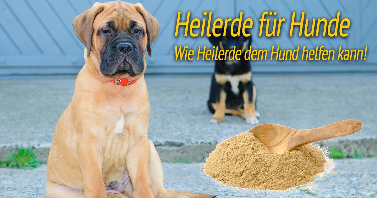 heilerde f r hunde wie heilerde dem hund helfen kann. Black Bedroom Furniture Sets. Home Design Ideas