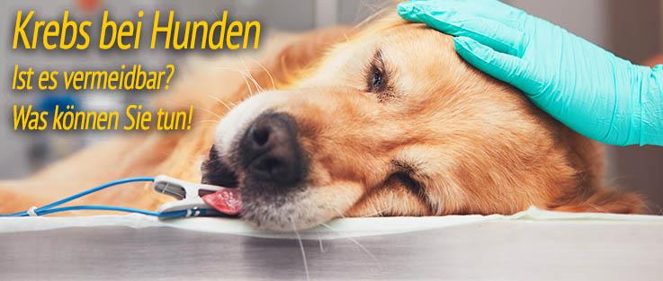Krebs Bei Hunden Von Anzeichen Ernährung Und Ursachen Behandeln