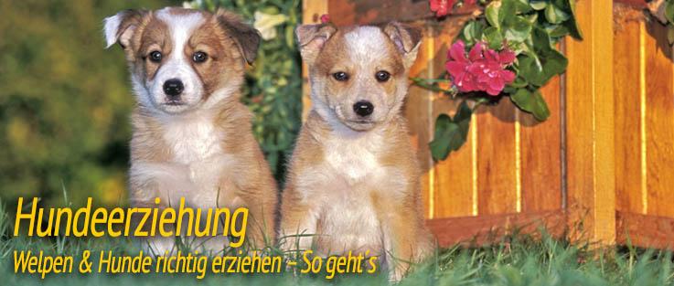 Hundeerziehung - Welpen & Hunde richtig erziehen