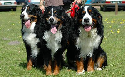 Mehrere Hunde gleichzeitig erziehen