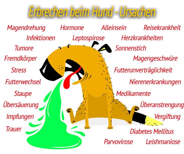 Ursachen - Erbrechen beim Hund