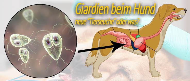 Giardien und Giardiose bei Haustieren