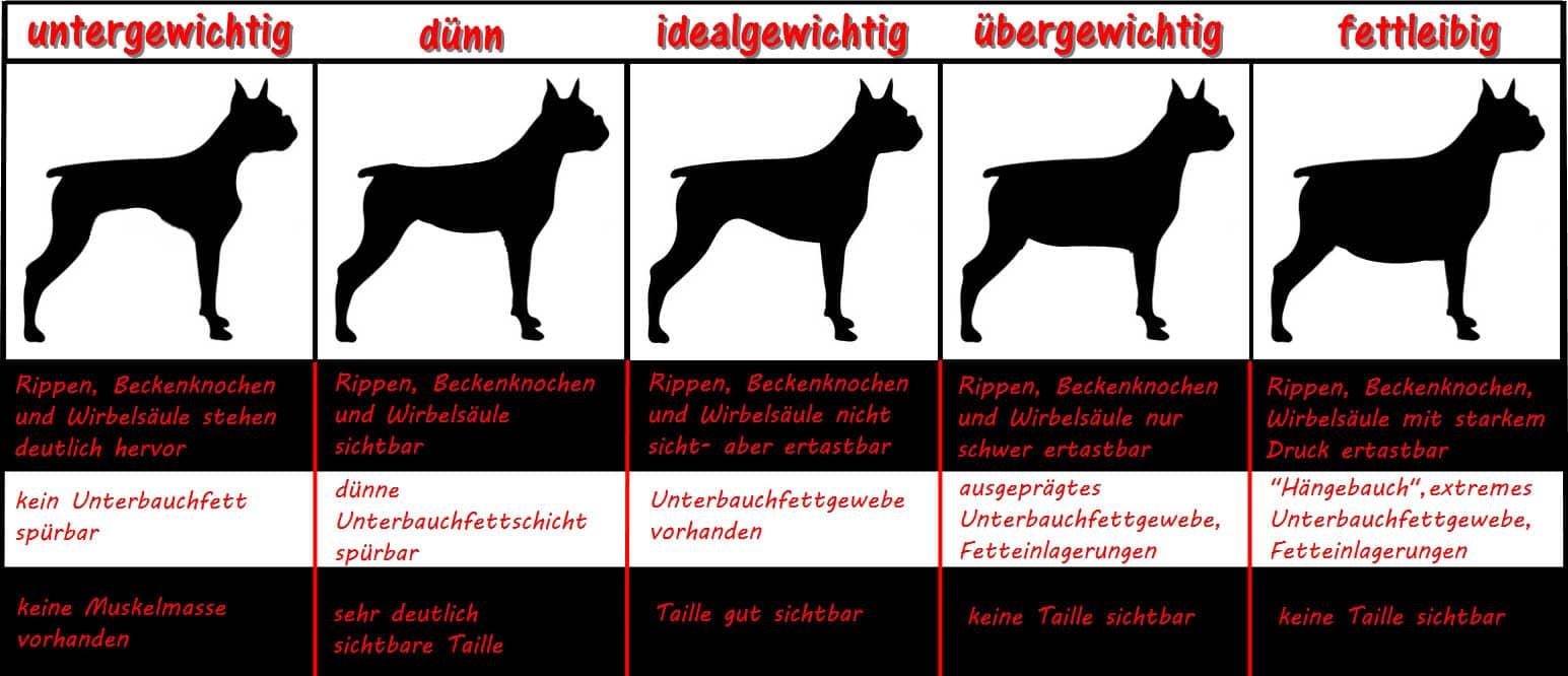 Infografik: Wie erkennt man Übergewicht beim Hund?