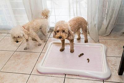 Stuhlinkontinenz bei Hunden