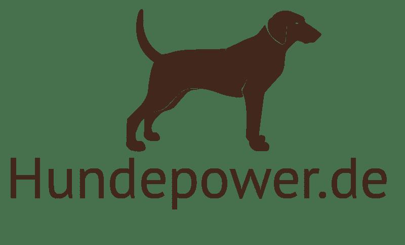 Milben Beim Hund ᐅ Wie Erkennen Und Was Tun Mit Tipps Und Hilfen