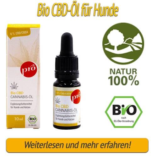 CBD-Öl für Hunde