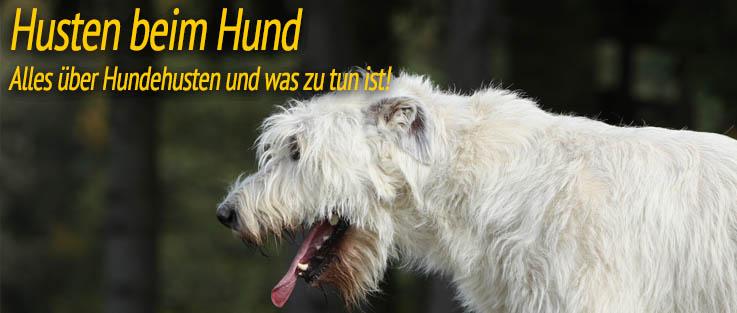 Husten beim Hund - Alles über Hundehusten und was zu tun ist