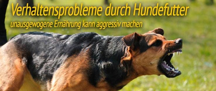 Verhaltensprobleme durch Hundefutter - unausgewogene Ernährung kann aggressiv machen