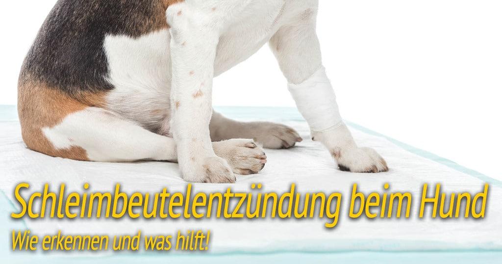 Schleimbeutelentzündung beim Hund - Wie erkennen und was hilft!