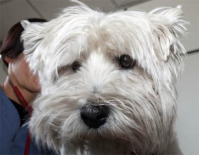 Hund mit akuter Niereninsuffizienz bei Untersuchung