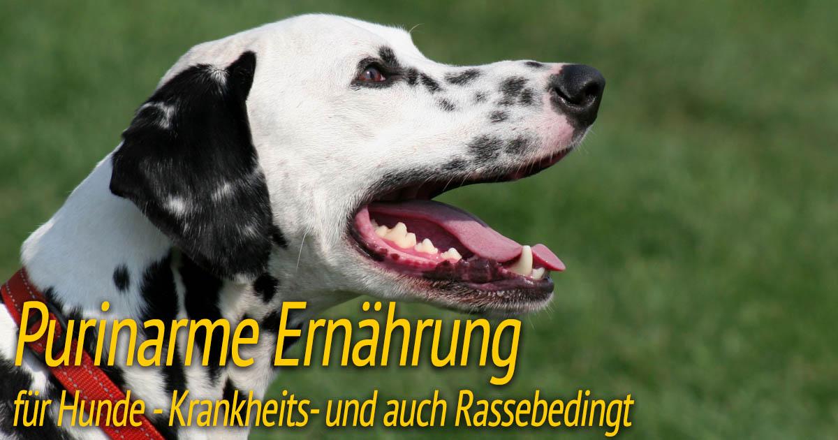 Purinarme Ernährung für Hunde
